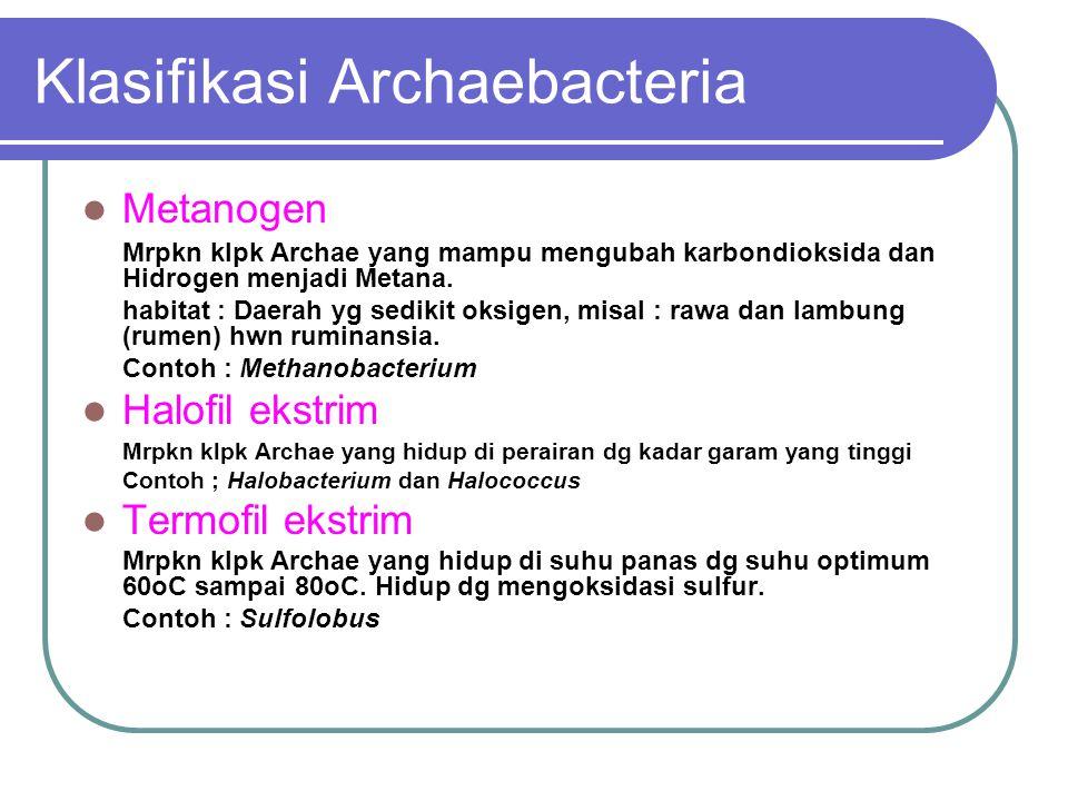 Klasifikasi Archaebacteria