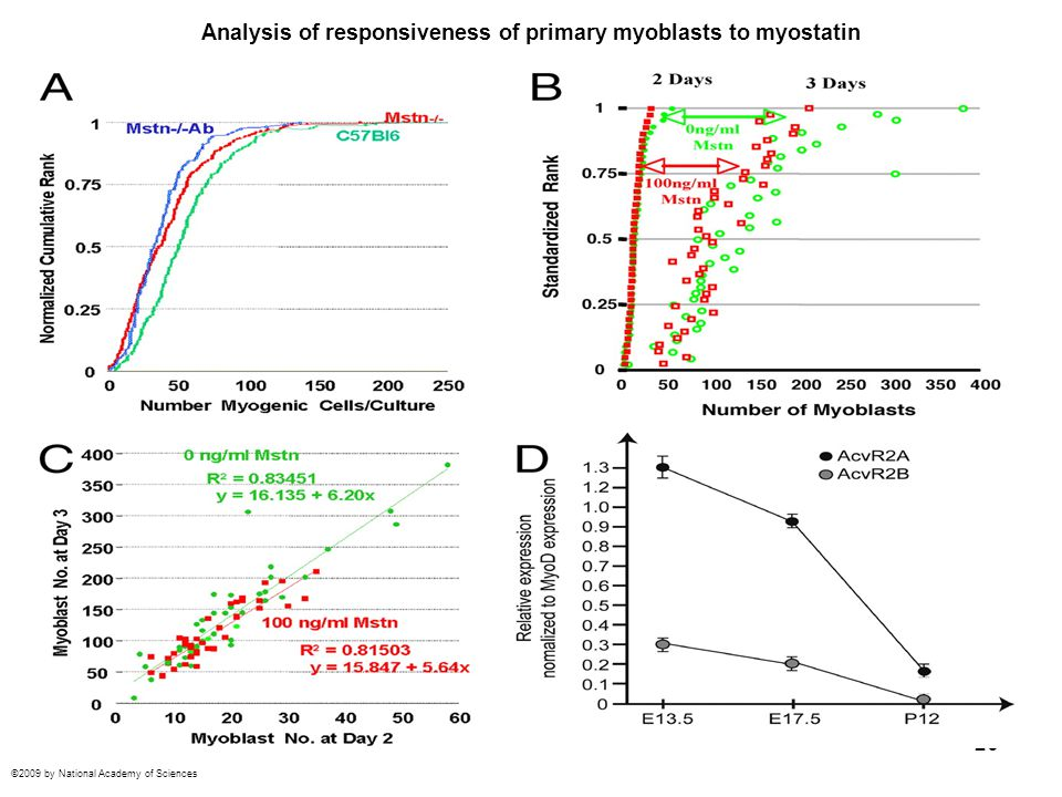 Analysis of responsiveness of primary myoblasts to myostatin