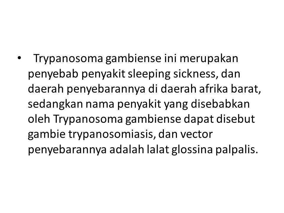 Trypanosoma gambiense ini merupakan penyebab penyakit sleeping sickness, dan daerah penyebarannya di daerah afrika barat, sedangkan nama penyakit yang disebabkan oleh Trypanosoma gambiense dapat disebut gambie trypanosomiasis, dan vector penyebarannya adalah lalat glossina palpalis.