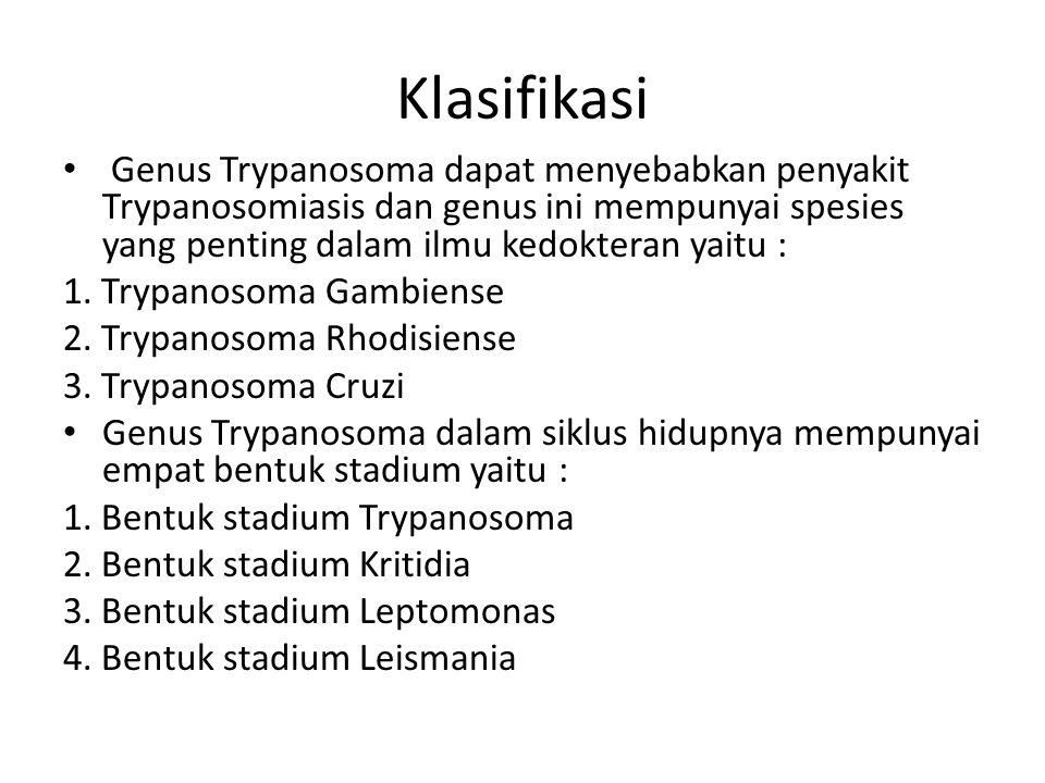 Klasifikasi Genus Trypanosoma dapat menyebabkan penyakit Trypanosomiasis dan genus ini mempunyai spesies yang penting dalam ilmu kedokteran yaitu :
