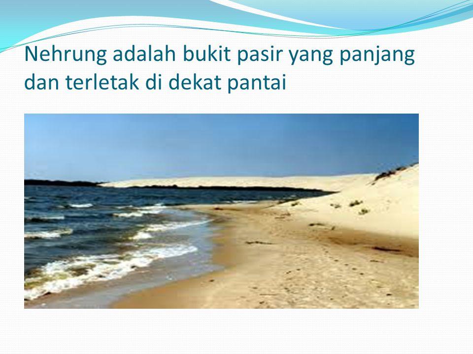 Nehrung adalah bukit pasir yang panjang dan terletak di dekat pantai