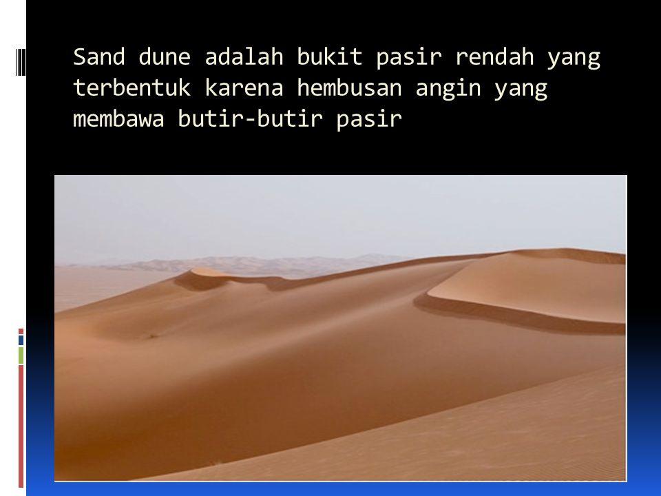 Sand dune adalah bukit pasir rendah yang terbentuk karena hembusan angin yang membawa butir-butir pasir