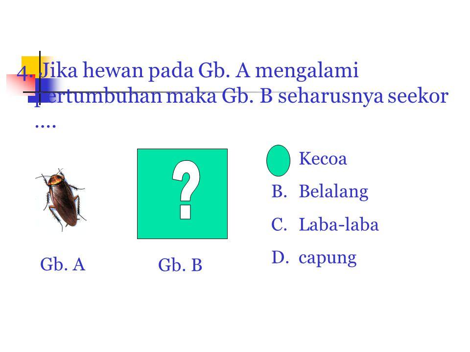 4. Jika hewan pada Gb. A mengalami pertumbuhan maka Gb