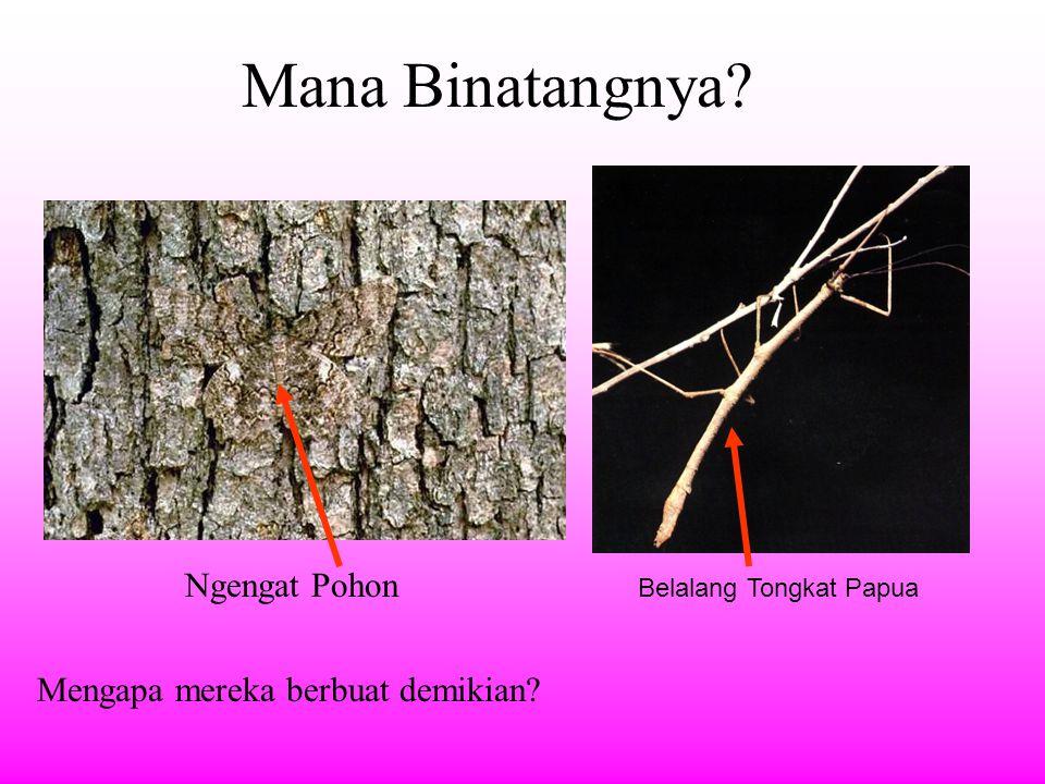 Mana Binatangnya Ngengat Pohon Mengapa mereka berbuat demikian