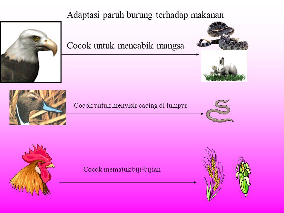 Adaptasi paruh burung terhadap makanan