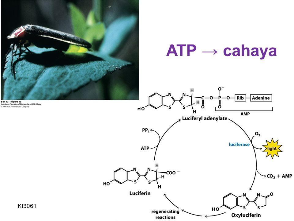 ATP → cahaya KI3061 Zeily Nurachman