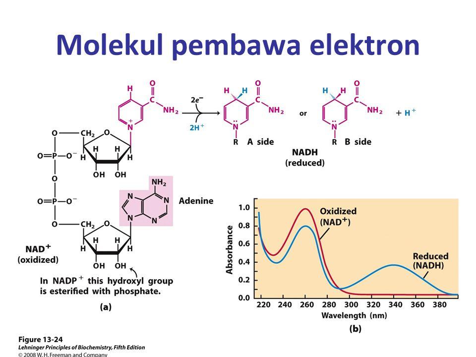 Molekul pembawa elektron