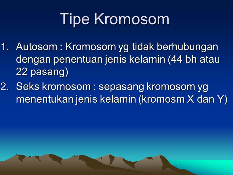Tipe Kromosom Autosom : Kromosom yg tidak berhubungan dengan penentuan jenis kelamin (44 bh atau 22 pasang)