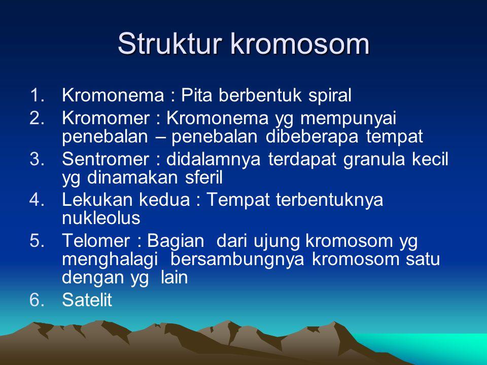 Struktur kromosom Kromonema : Pita berbentuk spiral