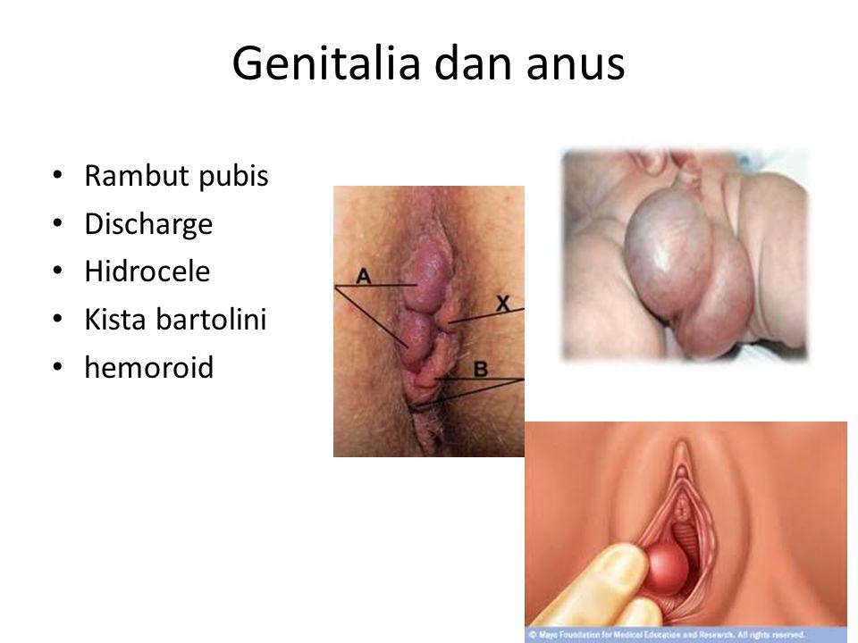 Genitalia dan anus Rambut pubis Discharge Hidrocele Kista bartolini