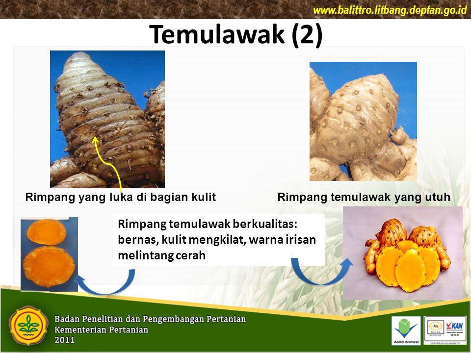 Temulawak (2) Rimpang temulawak berkualitas: