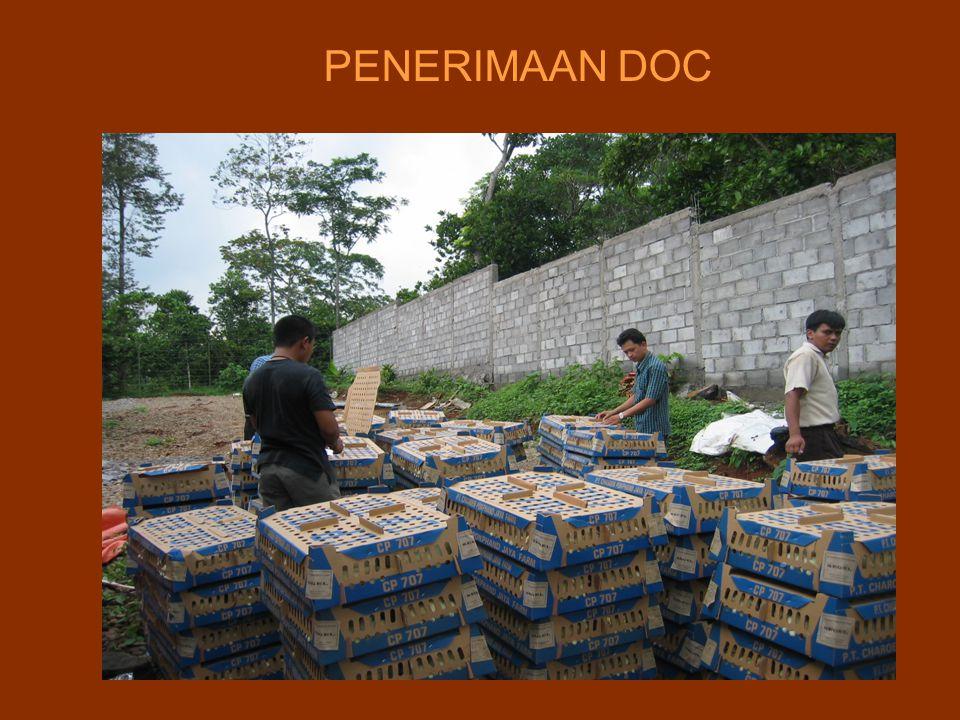 PENERIMAAN DOC