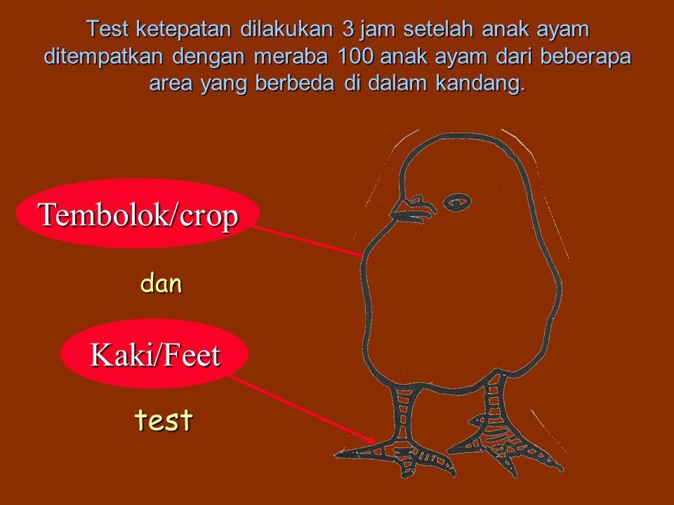 Tembolok/crop Kaki/Feet test dan