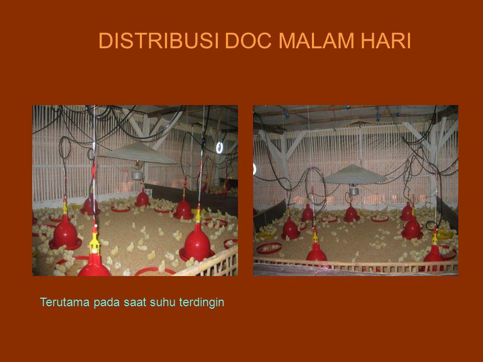 DISTRIBUSI DOC MALAM HARI