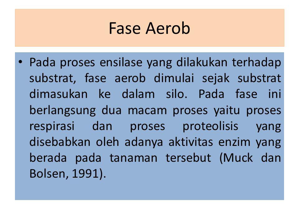 Fase Aerob