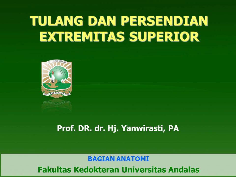 TULANG DAN PERSENDIAN EXTREMITAS SUPERIOR