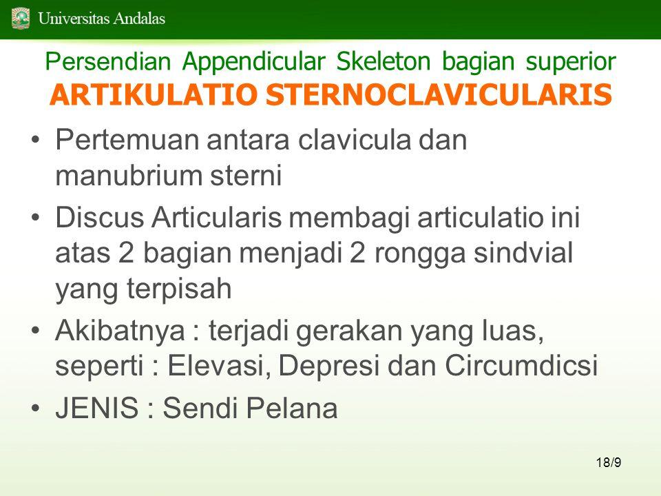 Persendian Appendicular Skeleton bagian superior