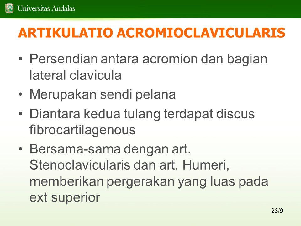 ARTIKULATIO ACROMIOCLAVICULARIS