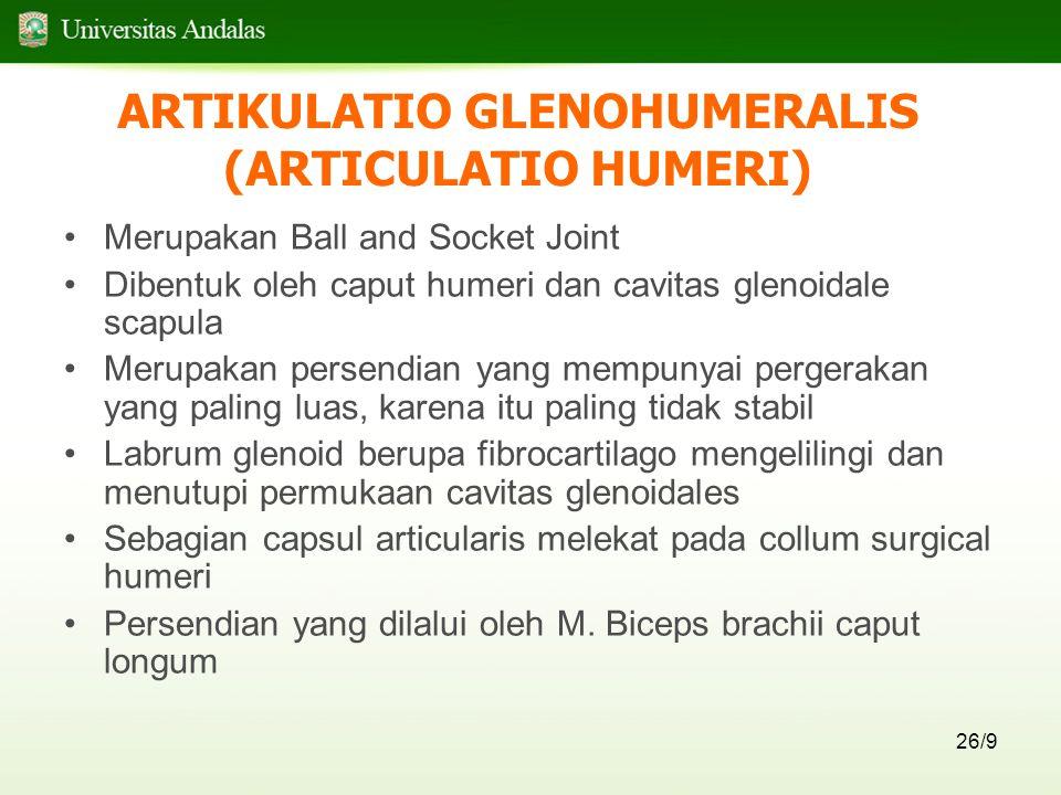 ARTIKULATIO GLENOHUMERALIS (ARTICULATIO HUMERI)