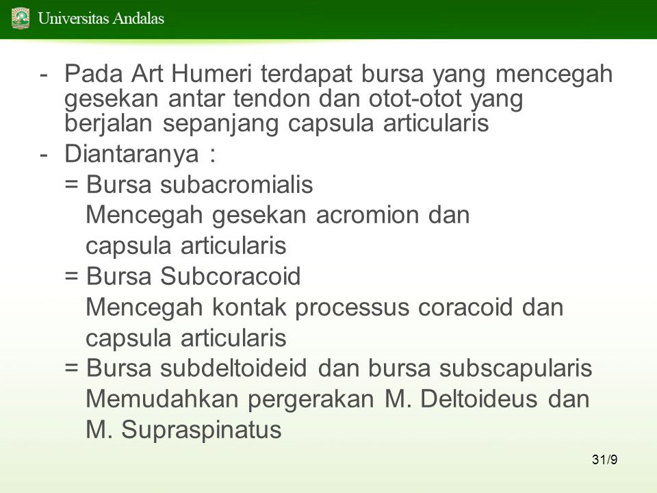 Pada Art Humeri terdapat bursa yang mencegah gesekan antar tendon dan otot-otot yang berjalan sepanjang capsula articularis