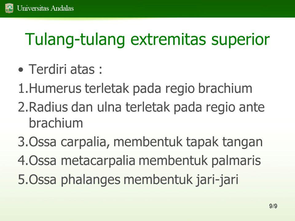Tulang-tulang extremitas superior