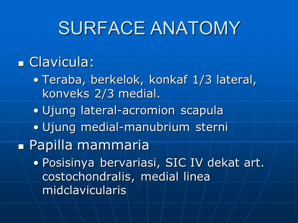 SURFACE ANATOMY Clavicula: Papilla mammaria
