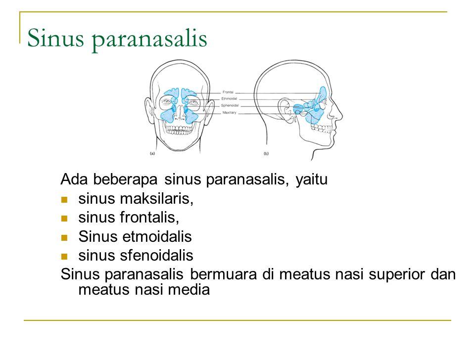 Sinus paranasalis Ada beberapa sinus paranasalis, yaitu