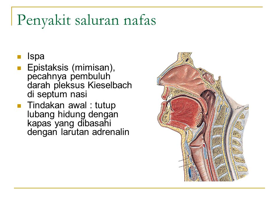 Penyakit saluran nafas