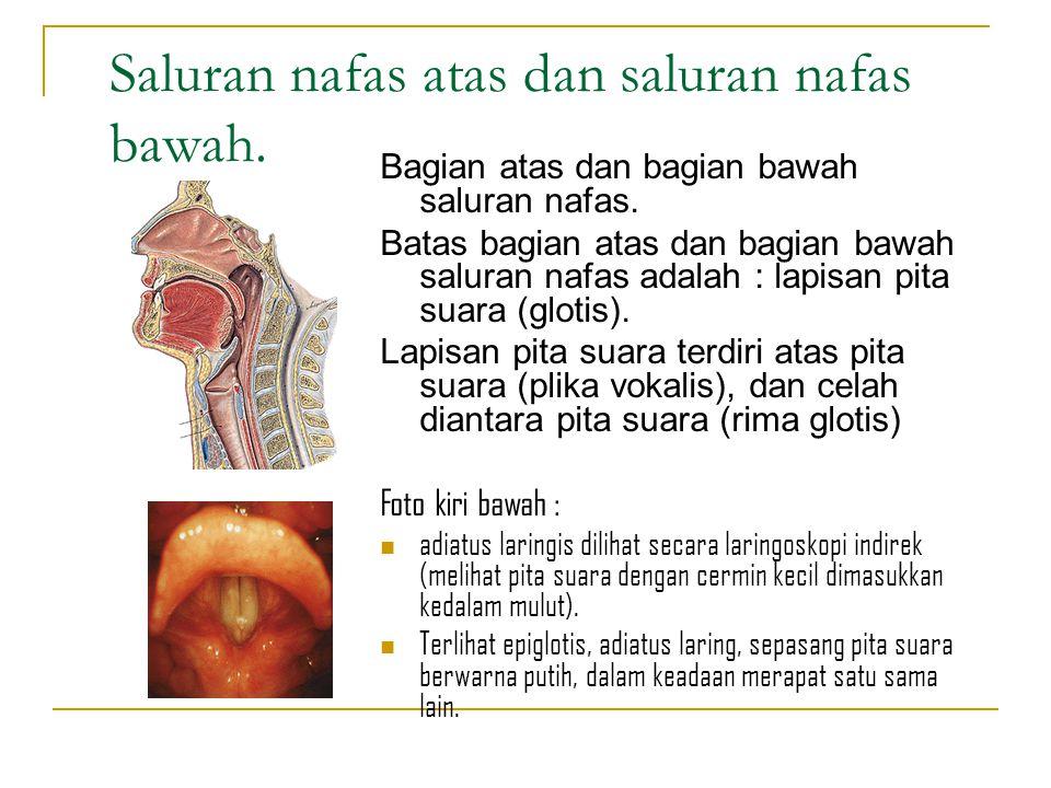 Saluran nafas atas dan saluran nafas bawah.