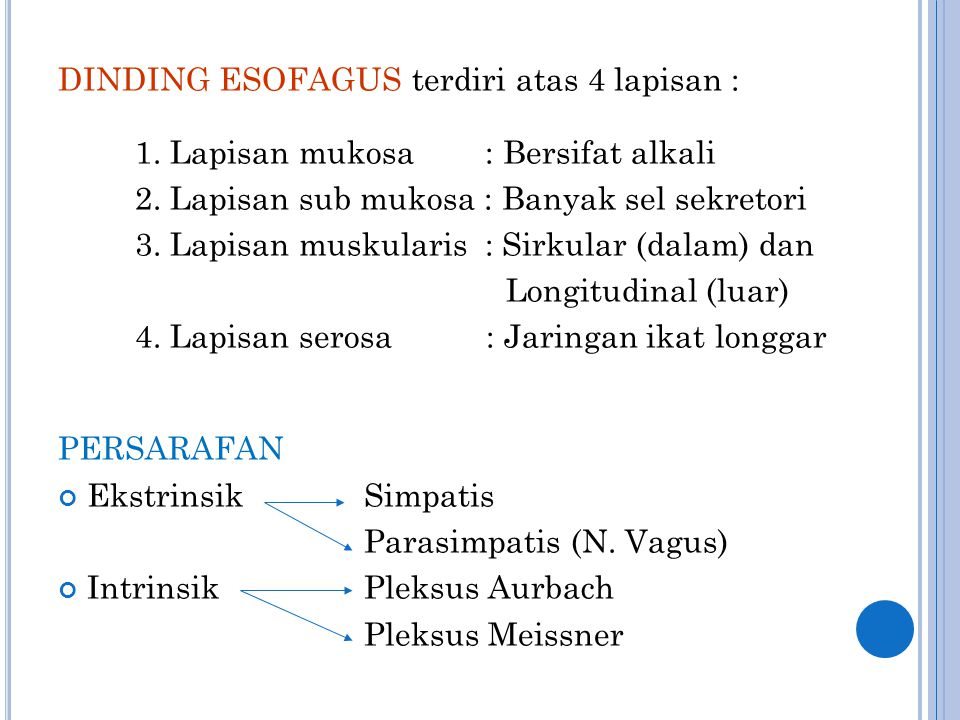DINDING ESOFAGUS terdiri atas 4 lapisan :