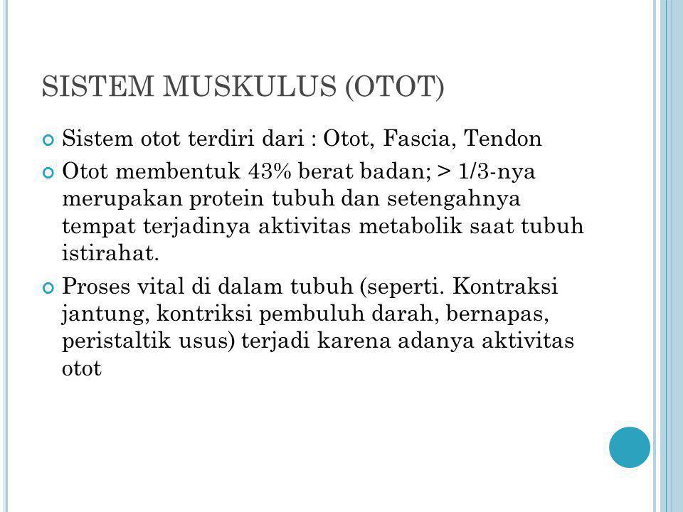 SISTEM MUSKULUS (OTOT)