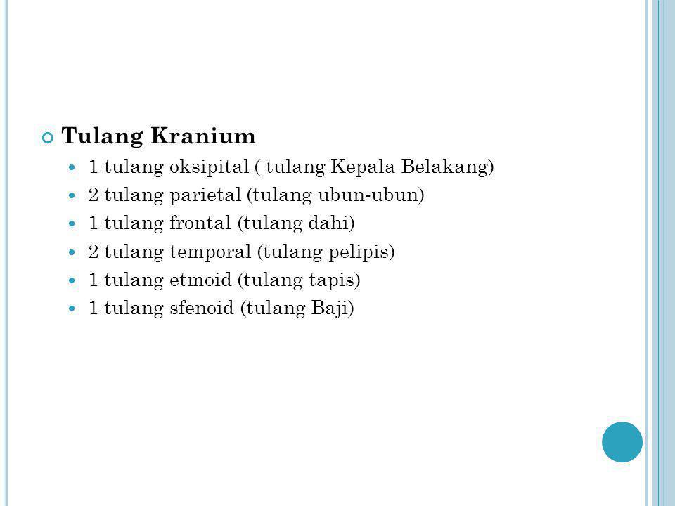 Tulang Kranium 1 tulang oksipital ( tulang Kepala Belakang)