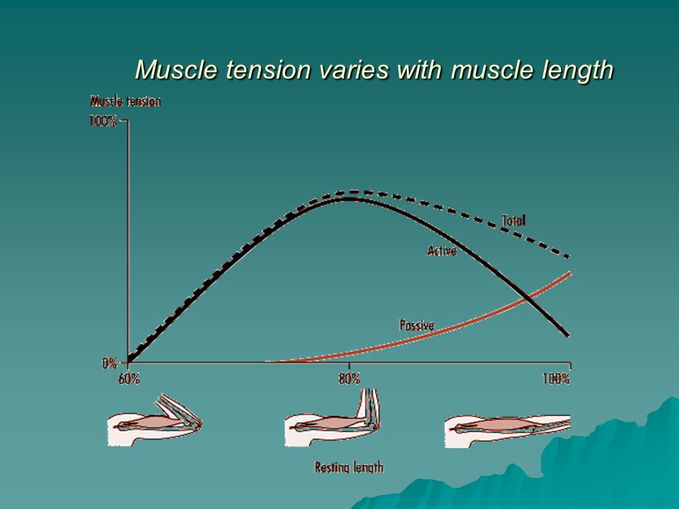 Muscle tension varies with muscle length