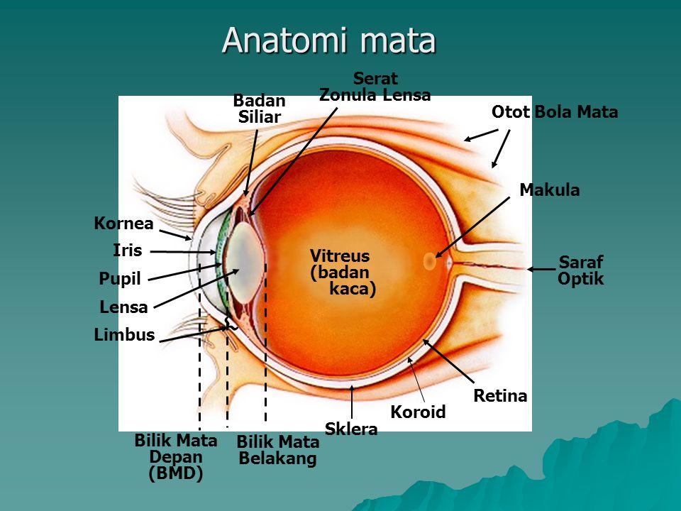Anatomi mata Serat Zonula Lensa Badan Siliar Otot Bola Mata Makula