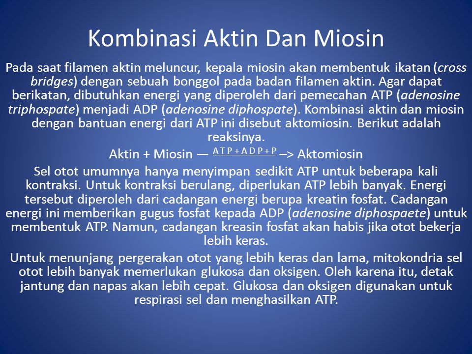 Kombinasi Aktin Dan Miosin