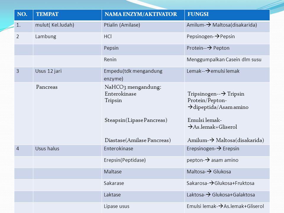 NO. TEMPAT. NAMA ENZYM/AKTIVATOR. FUNGSI. 1. mulut( Kel.ludah) Ptialin (Amilase) Amilum- Maltosa(disakarida)