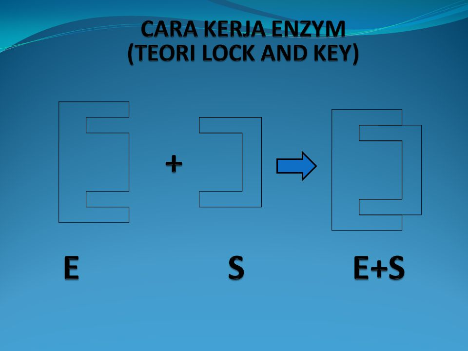 CARA KERJA ENZYM (TEORI LOCK AND KEY) + E S E+S