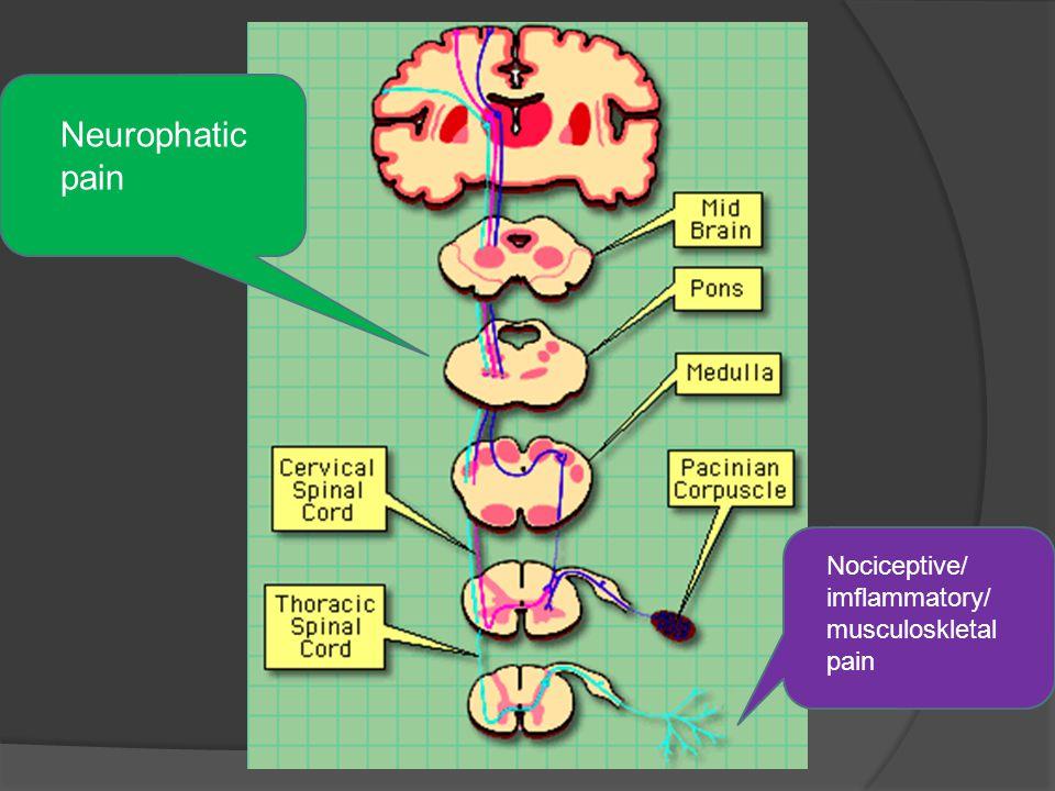 Neurophatic pain Nociceptive/ imflammatory/ musculoskletal pain