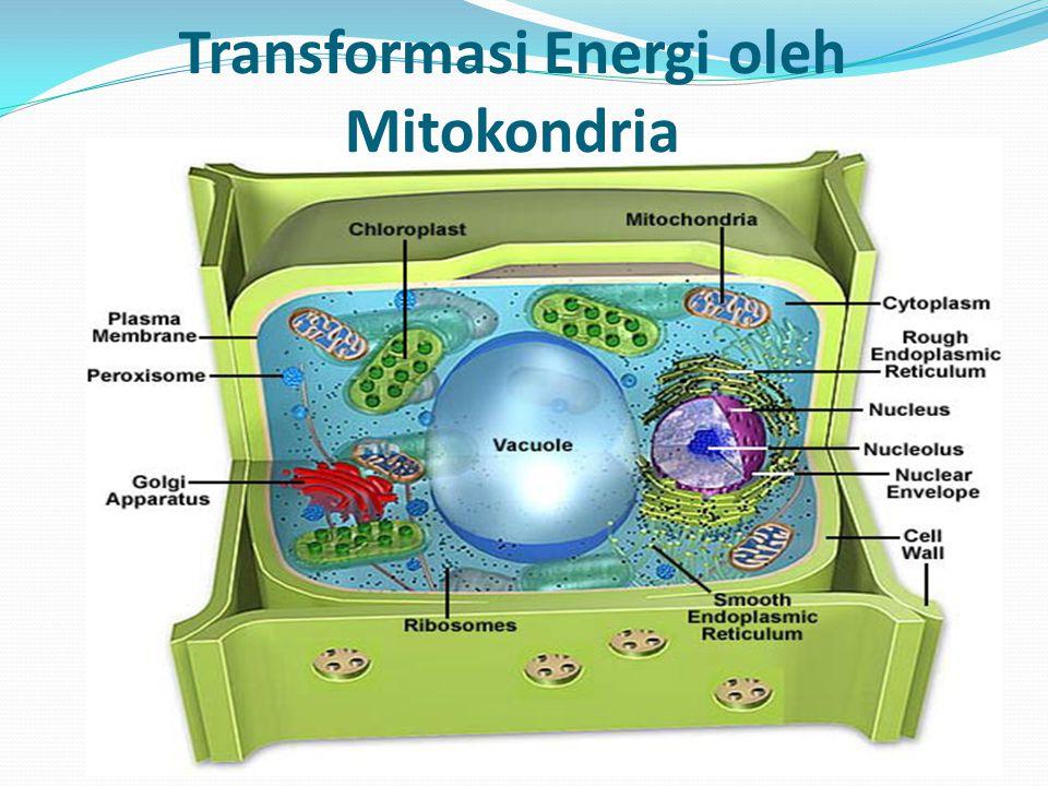 Transformasi Energi oleh Mitokondria