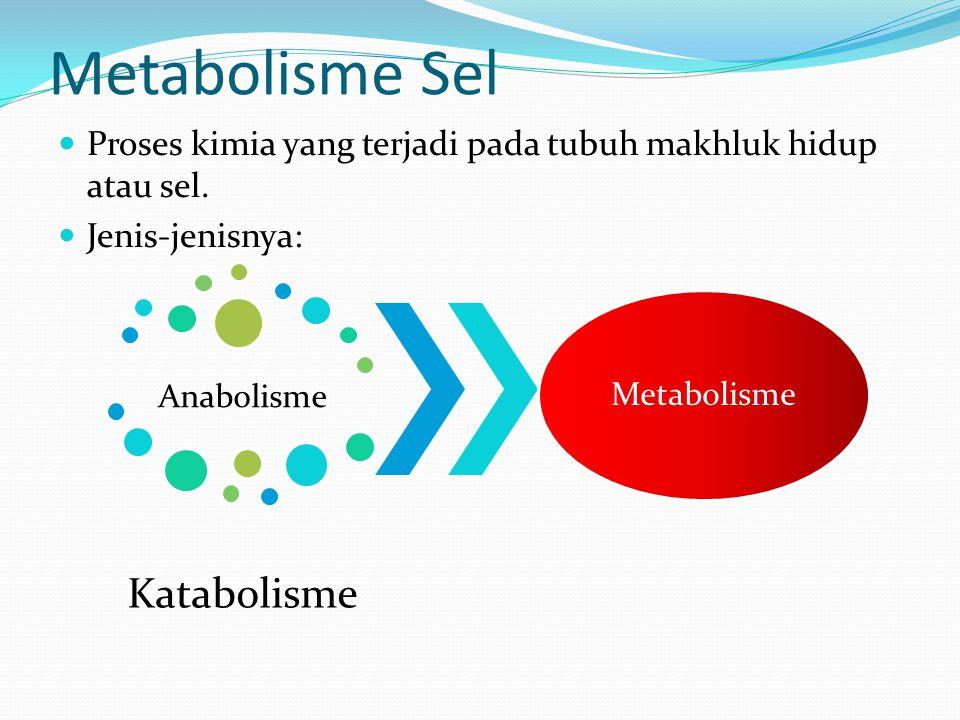 Metabolisme Sel Proses kimia yang terjadi pada tubuh makhluk hidup atau sel. Jenis-jenisnya: Anabolisme.