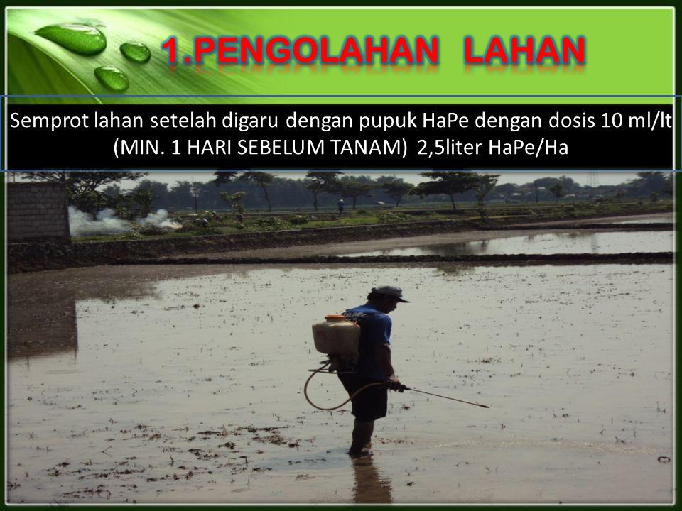 1.PENGOLAHAN LAHAN Semprot lahan setelah digaru dengan pupuk HaPe dengan dosis 10 ml/lt (MIN.