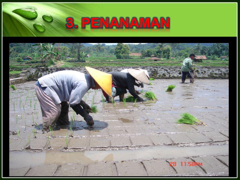 3. PENANAMAN