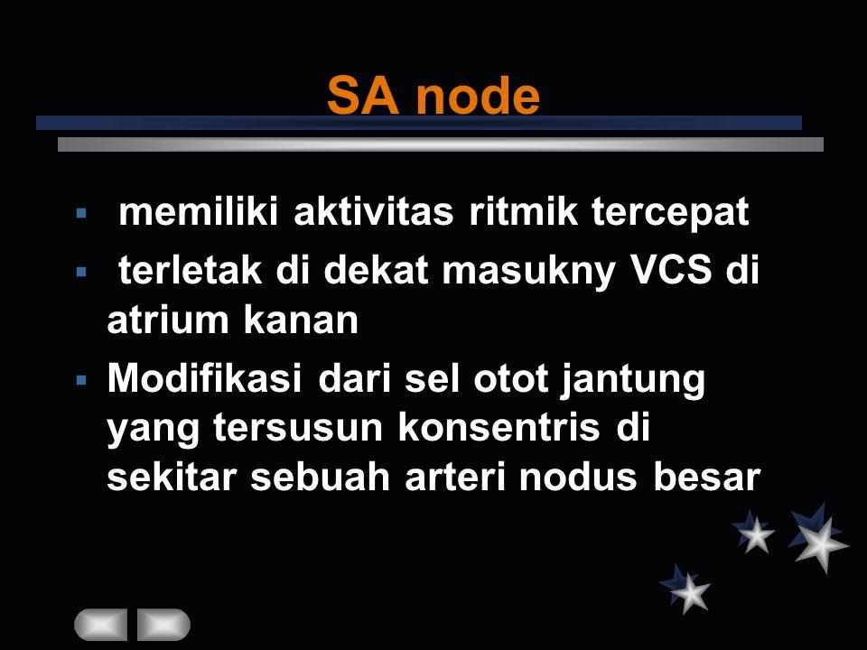 SA node memiliki aktivitas ritmik tercepat