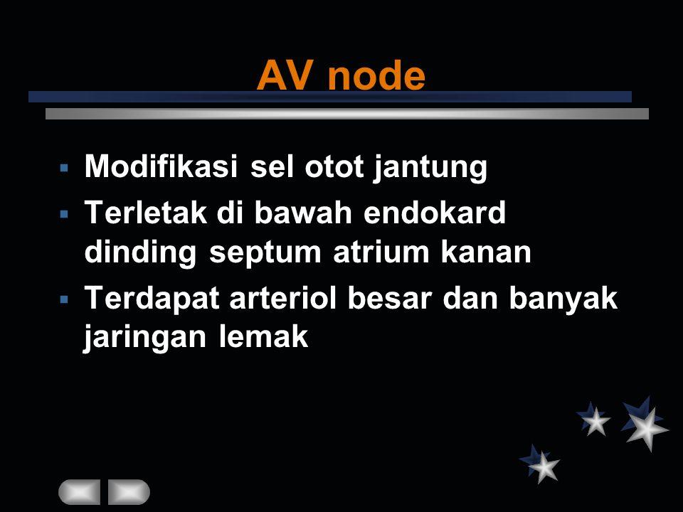 AV node Modifikasi sel otot jantung