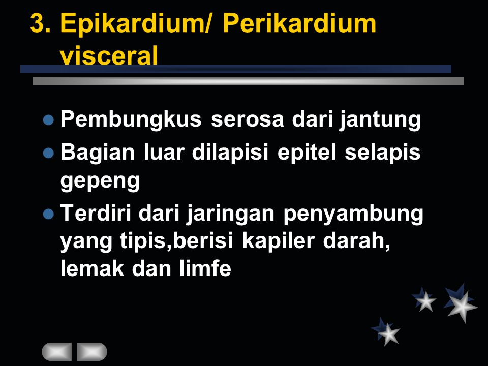 3. Epikardium/ Perikardium visceral