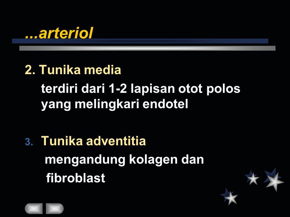 ...arteriol 2. Tunika media. terdiri dari 1-2 lapisan otot polos yang melingkari endotel. Tunika adventitia.