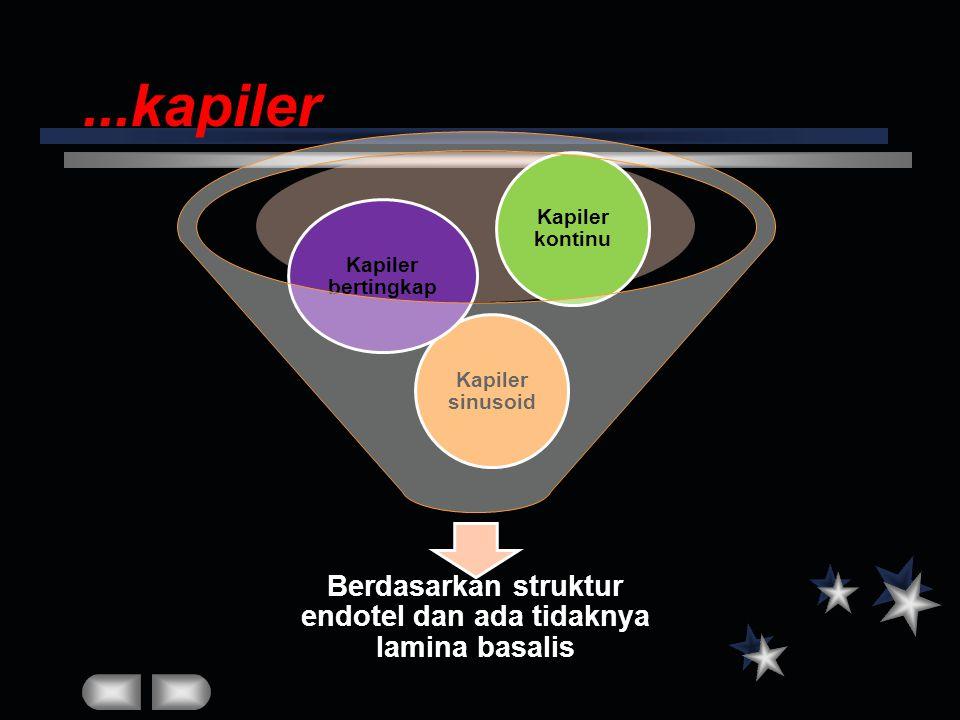 Berdasarkan struktur endotel dan ada tidaknya lamina basalis