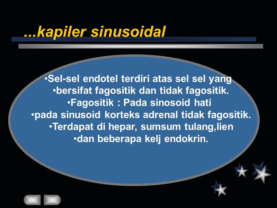 ...kapiler sinusoidal Sel-sel endotel terdiri atas sel sel yang
