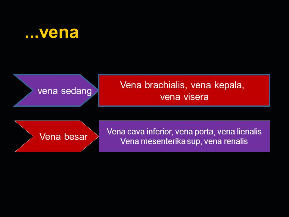 ...vena Vena brachialis, vena kepala, vena sedang vena visera