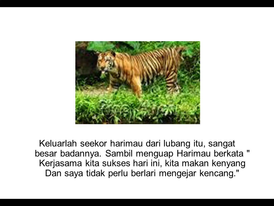 Keluarlah seekor harimau dari lubang itu, sangat besar badannya